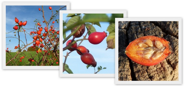 Newsletter - Poil a gratter plante ...